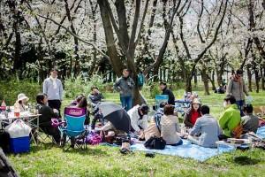 2014.04.06_NIFS花見_ぼかし